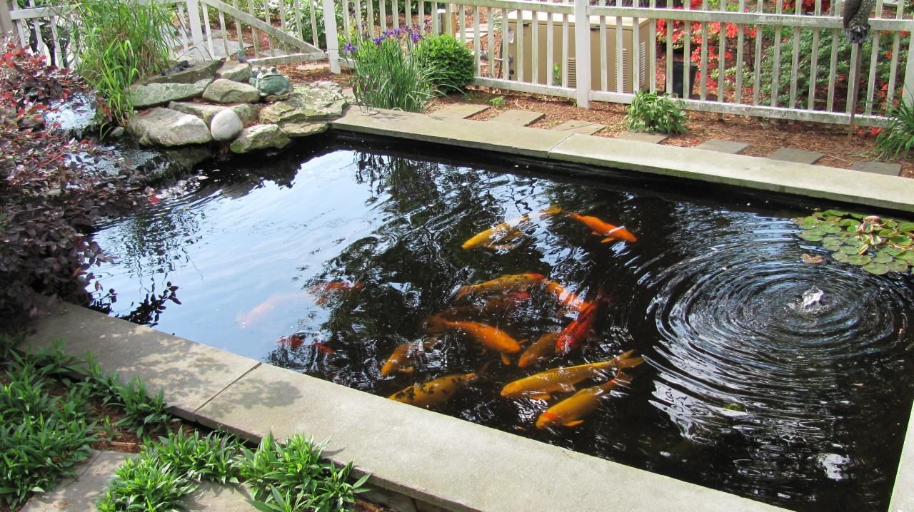 Diamond landscapes water features for Concrete koi pond design